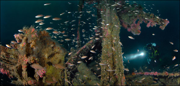 the Tuna Clipper Ship Wreck